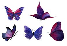 watercolor butterflies on a transparent background