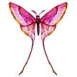 Watercolor butterflies vector Stock Photo