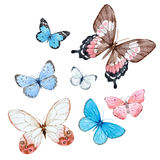 Watercolor butterflies vector set. Beautiful set with hand drawn watercolor vector butterflies on transparent background royalty free illustration