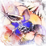 Watercolor Butterfly Background Stock Photos