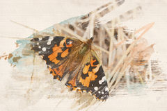 Watercolor Butterfly background Royalty Free Stock Photography