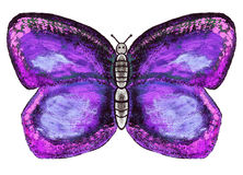 Watercolor butterfly Royalty Free Stock Photo