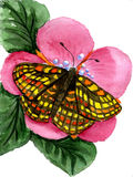 Watercolor the butterfly on a flower. Watercolor butterfly on a pink flower on a white background Royalty Free Stock Image