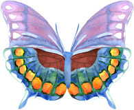 Watercolor butterfly Stock Photography