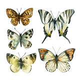 Watercolor butterfly set Stock Photo
