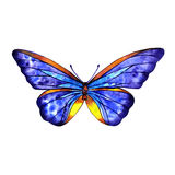 Watercolor butterfly summer. Spring on white background Royalty Free Stock Photography