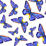 Watercolor butterfly summer. Spring on white background Stock Images