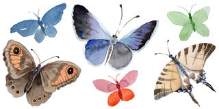 Watercolor butterfly tender insect, intresting moth, isolated wing illustration. Butterfly names: swallowtail, monarch, queen. Aquarelle for background Royalty Free Stock Photo
