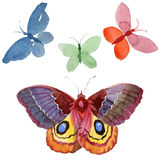 Watercolor butterfly tender insect, intresting moth, isolated wing illustration Stock Image