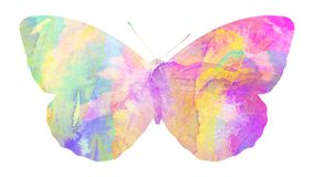 watercolor butterfly. tropical insect for design. isolated on white background