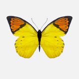 Watercolor butterfly - vector Royalty Free Stock Images