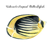 Watercolor Butterflyfish. Hand painted tropic fish  on white background. Underwater animal illustration for. Design, fabric or print Stock Images