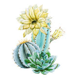 Watercolor cactus Stock Photos