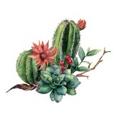 Watercolor cactus bouquet. Hand painted cereus with red flower, green succulent, berries and treebranch with leaves Royalty Free Stock Photography
