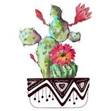 Watercolor cactus isolated on white background. Watercolor illustration cactus isolated on white background stock illustration