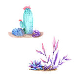 Watercolor cactus isolated on white background Royalty Free Stock Images