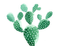 Watercolor Cactus Painting. Opuntia `Pad Cactus`. Royalty Free Stock Photo