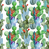 Watercolor cactus pattern Royalty Free Stock Image
