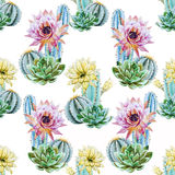 Watercolor cactus pattern Royalty Free Stock Photography