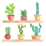 Watercolor cactus in pots on shelf Royalty Free Stock Photos