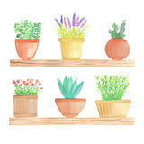 Watercolor cactus in pots on shelf. On white background Stock Photos
