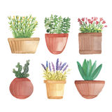 Watercolor cactus in pots on shelf Stock Image