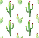 Watercolor cactus seamless pattern. Colorful vibrant cactus succulents Royalty Free Stock Image
