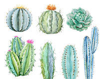 Watercolor cactus set. Beautiful image with hand drawn watercolor cactus stock illustration