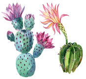 Watercolor cactus Royalty Free Stock Image