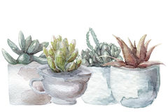 Watercolor cactus and succulent set. On white Royalty Free Stock Photos