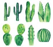 Watercolor cactus vector clip art. Green cacti. Botanical clipart bundle stock illustration