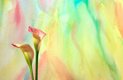Watercolor With Calla Lilies royalty free stock photo