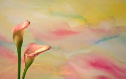 Watercolor With Calla Lilies 2 Royalty Free Stock Photos