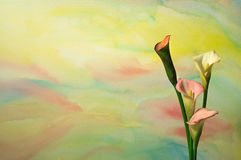 Watercolor With Calla Lilies 3. A background photograph of a watercolor painting behind 4 calla lilies positioned on the right side of the image, leaving room Royalty Free Stock Image