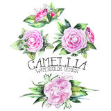 Watercolor camellia vignettes Royalty Free Stock Photo