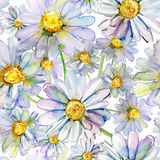 Watercolor camomile flowers Royalty Free Stock Photos