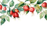 Watercolor card with branch of briar, red berries and green leaves. Hand painted Dog rose and hips isolated on white. Background. Illustration for design Stock Photo