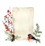 Watercolor card design with winter berries, textured old paper and bullfinch. Illustration with juniper, red berry and. Bird. For design or background stock illustration