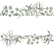 Watercolor card with eucalyptus branch. Hand painted floral frame with round leaves of silver dollar eucalyptus isolated Royalty Free Stock Images