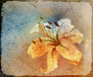 Watercolor card with lily. Coloured watercolor background. Abstract coloured card with lily Royalty Free Stock Image