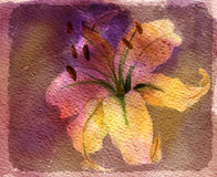Watercolor card with lily Royalty Free Stock Photo