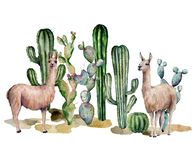 Watercolor card with llama and cacti. Hand painted beautiful illustration with animals and floral on white background stock image