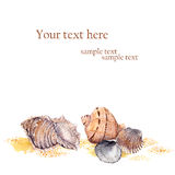 Watercolor card - sea shells in sand on beach Stock Images