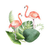 Watercolor card of tropical leaves and the pink Flamingo isolated on white background. Royalty Free Stock Photo