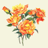 Watercolor Card with Yellow Garden Roses Royalty Free Stock Photography