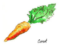 Watercolor carrot Royalty Free Stock Photo