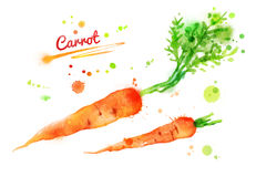 Watercolor carrots. Stock Photography