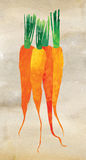 Watercolor carrots illustration Stock Images