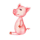 Watercolor cartoon cute pink pig isolated on white background, colorful illustration farmer domestic animal, Character design for Stock Image