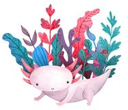 Watercolor cartoon cute posing Axolotl with waterplant. Watercolor cute posing axolotl with violet blue and pink seaweed and waterplant vector illustration